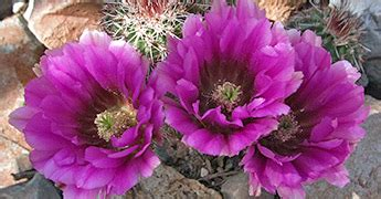 Plants of West and Southwest USA