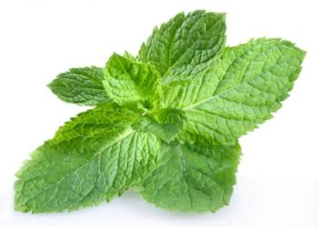 Mint dictionary definition | mint defined