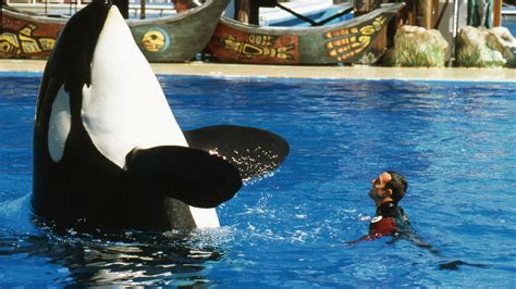 I trained killer whales at SeaWorld for 12 years